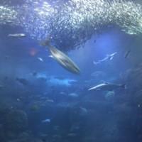 江の島水族館