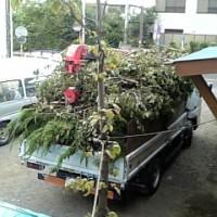 植木仕事 2